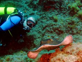 Gran Canaria dive locations - Round Ray