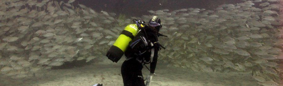 gran canaria diving with shoals of roncadors