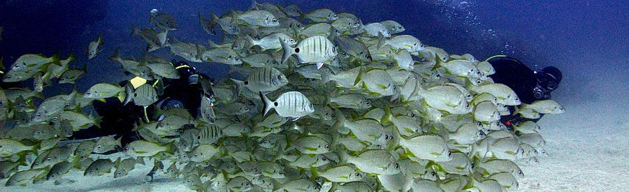 diving with shoals of fish gran canaria